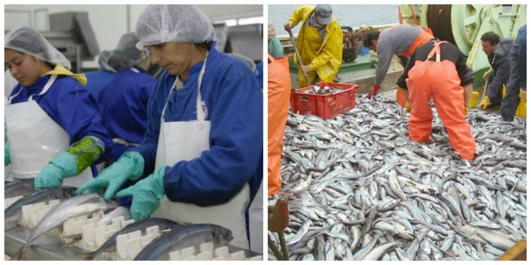 El adecuado uso de los acumuladores Inerox en la Industria pesquera