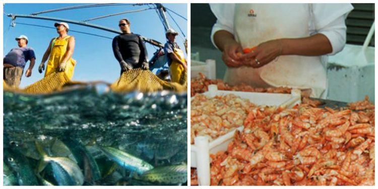 La actividad pesquera y su evolución a través de los años